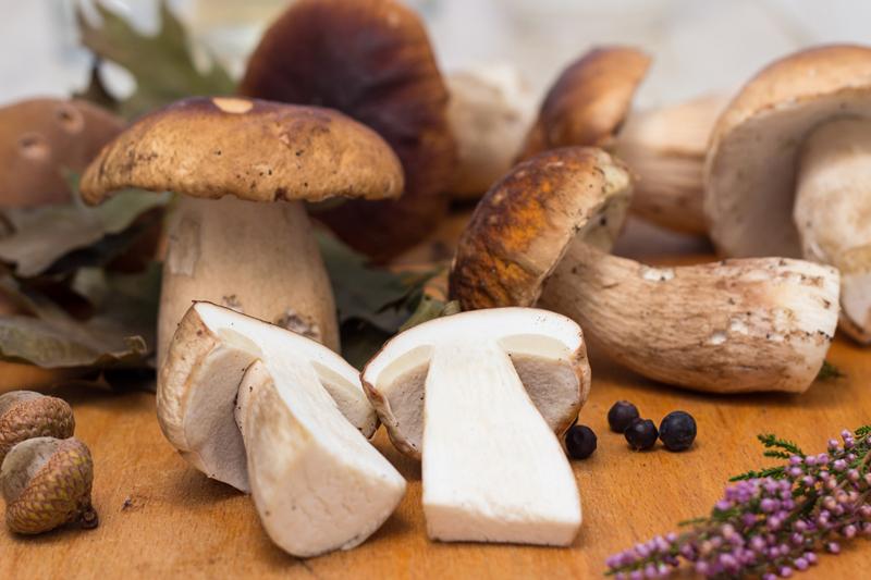 delight-in-a-variety-of-seasonal-porcini-mushroom-menus-at-medici-kitchen-bar-hotel-muse-bangkok